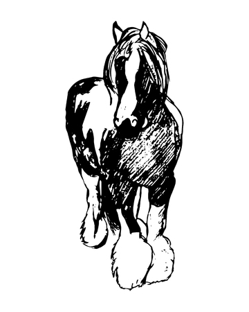 shire horse: Graphic image of a large horse. Purebred heavy horse hairy feet. Horse pattern on a white background. Abstraction, vector illustration Illustration