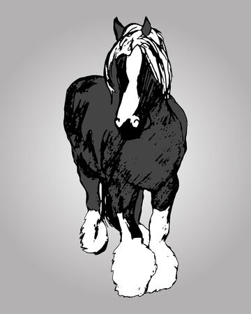 shire horse: Graphic image of a large horse. Purebred heavy horse hairy feet. The horse print on grey background. Abstraction, vector illustration
