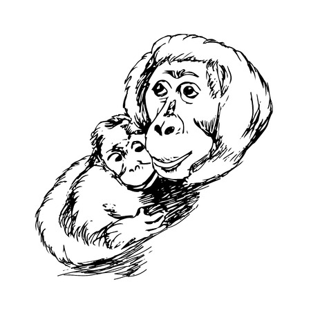 quick drawing: The graphic image of the monkey, monkey head, the face. Drawing by hand on a white background. Vector illustration, quick sketch Illustration