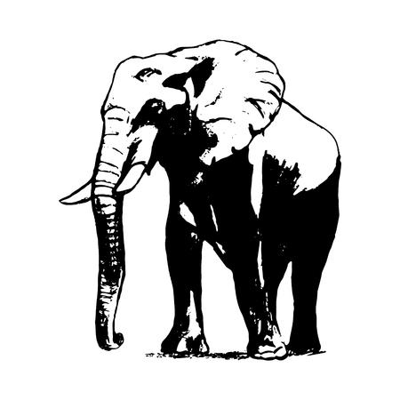 Imagen gráfica de un elefante sobre un fondo blanco. El dibujo a mano alzada, el boceto simple. Las líneas negras en forma de un gran elefante. Ilustración vectorial