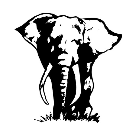 Graphic image of an elephant on a white background. The freehand drawing, the simple sketch. The black lines in the form of a large elephant. Vector illustration