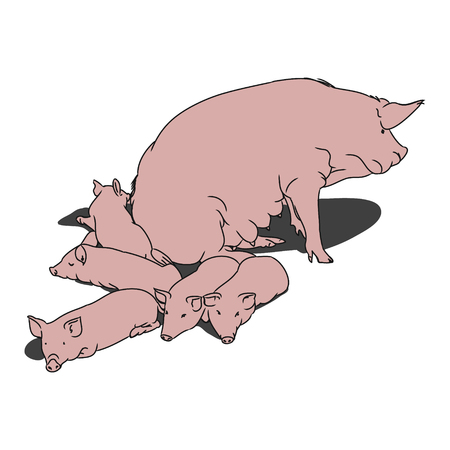 contoured: A graphical image of a pig and her piglets. The contoured silhouette pink pigs on a white background. Vector illustration