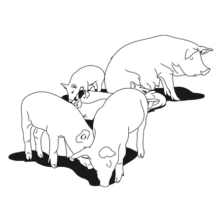 Graphic image of a pig and her piglets. Outline drawing of pig on white background. Vector illustration Illustration