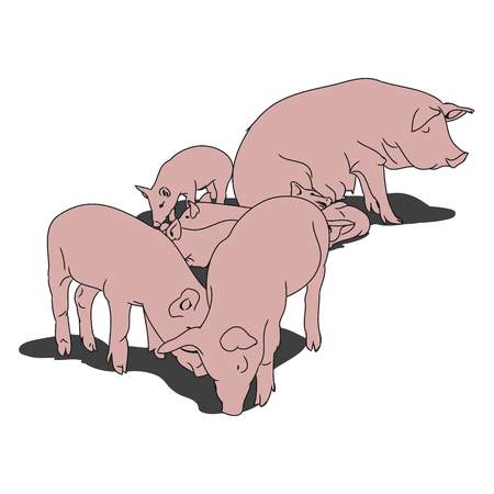 A graphical image of a pig and her piglets. The contoured silhouette pink pigs on a white background. Vector illustration