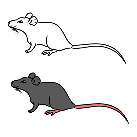 Figure (outline) of a mouse, contour and color. On white background vector