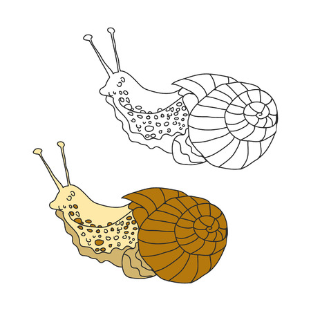 mucous: A slug or snail on white background abstract, vector illustration Illustration
