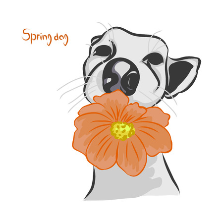 The dog with the orange flower on white background, vector illustration