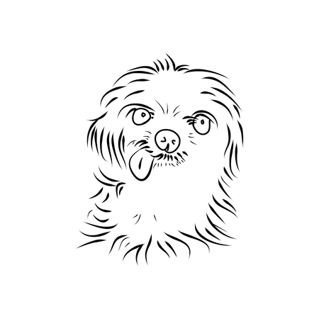 animal head: Shaggy puppy head on white background, vector Illustration