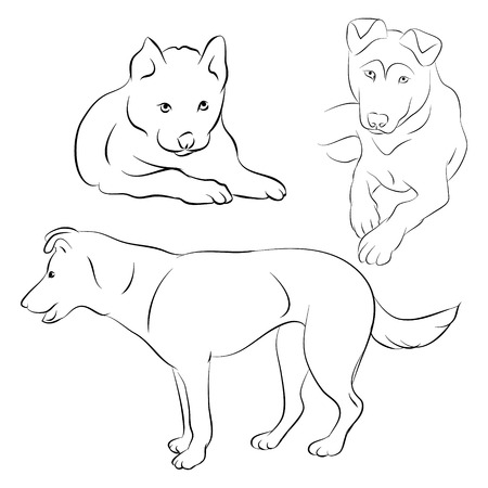 The contours of the dog and puppy on white background, vector