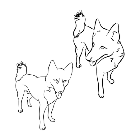 The outline of the dog on white background, breed husky.