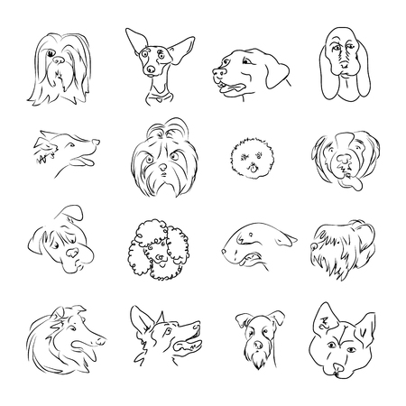 Simple lines on white background, heads of dogs of different breeds, set vector illustration.