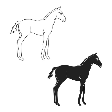 Foal outline and silhouette on white background, vector illustration.