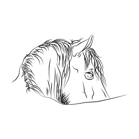 Horse head from lines on white background, vector illustration.