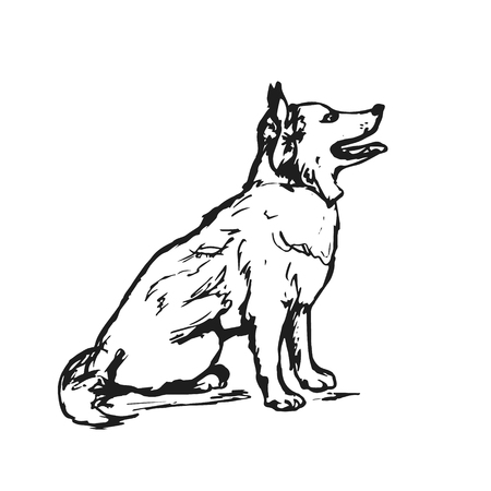 Graphic image of a dog on a white background, vector illustration