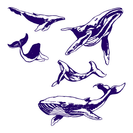 whale drawing with a ballpoint blue pen. Set of illustrations on white background 免版税图像