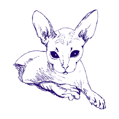 cat Sphinx sketch. Freehand drawing on white  background