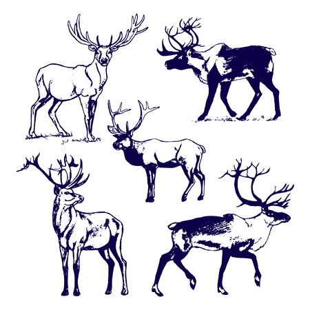 Deer on white background picture. Set of  illustrations on white background
