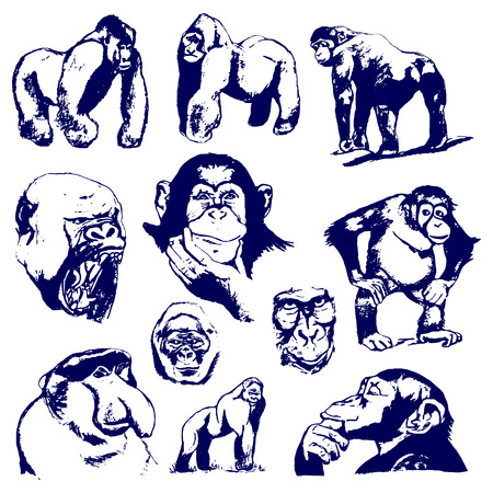 Monkey graphic drawing. Set of illustrations on white background