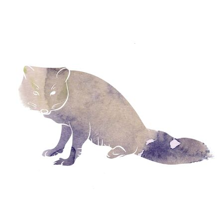 Arctic Fox watercolor, illustration on white background