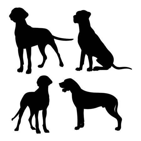 Silhouette of a great Dane. Black silhouette of a dog mastiff, set of illustrations on a white background. 矢量图像