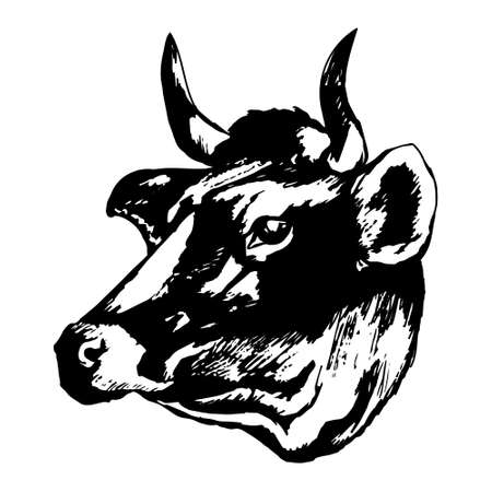 Cow's head on a white background