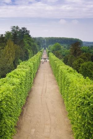 sculpted: Lijn van gebeeldhouwde bomen langs het pad in de tuinen van Versailles, Frankrijk.  Stockfoto