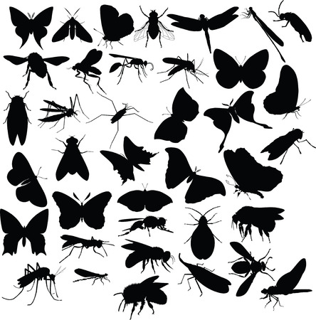 insect flies: insects, silhouettes Illustration