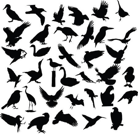 bird animal tattoo Stock Vector - 6500832