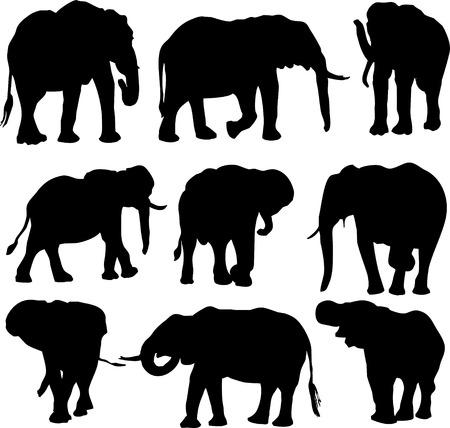 elephant animals