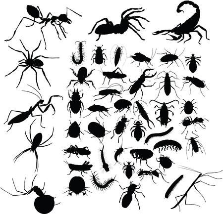 insecten tattoo