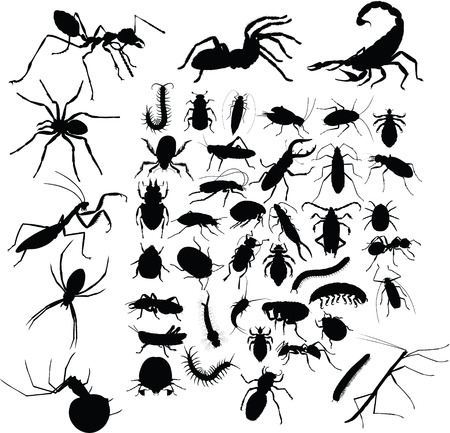 insects tattoo Vector