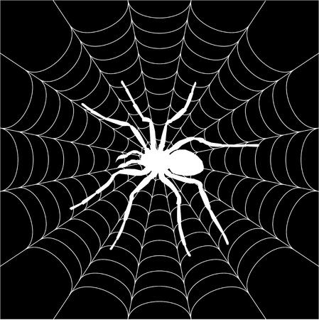 spiders web: spider, spiderweb Illustration