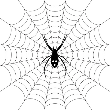 spinnennetz: Spinne Illustration