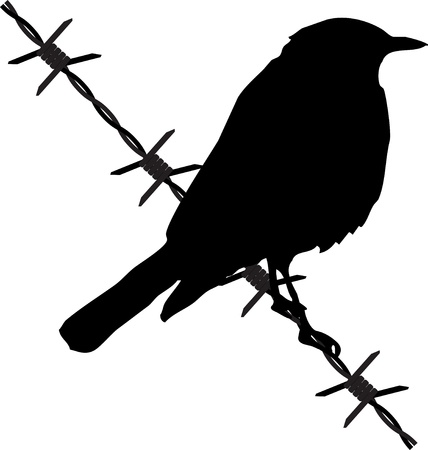 wire fence: bird on the barbed wire