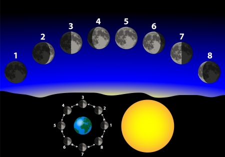 lunar phases: phases of the moon Illustration
