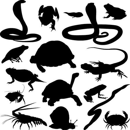 amphibians: reptiles and amphibians Illustration