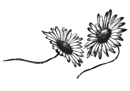 antique flowers engraving  Illustration