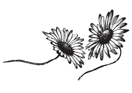 etching pattern: antique flowers engraving  Illustration