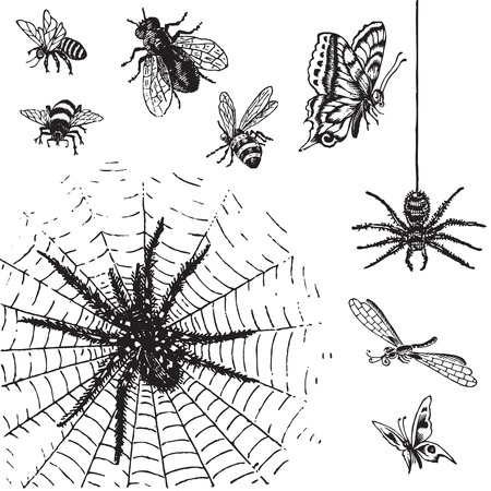 etching pattern: antique insects set