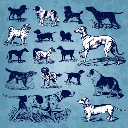 pointer dog: dogs vintage set (vector)