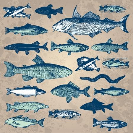 xilografia: conjunto de cosecha de peces (vector) Vectores