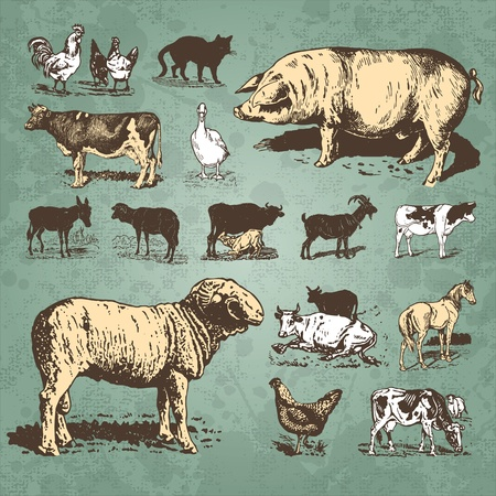 vintage farm animals set (vector) Stock Vector - 9320302