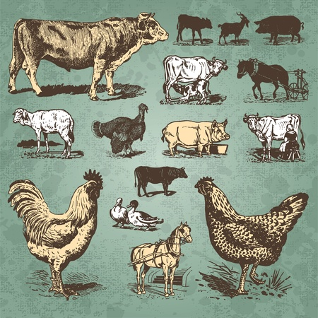 vintage farm animals set (vector) Stock Vector - 9320306