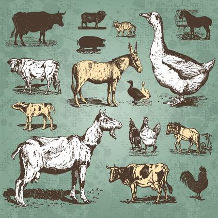 vintage farm animals set (vector) Vector