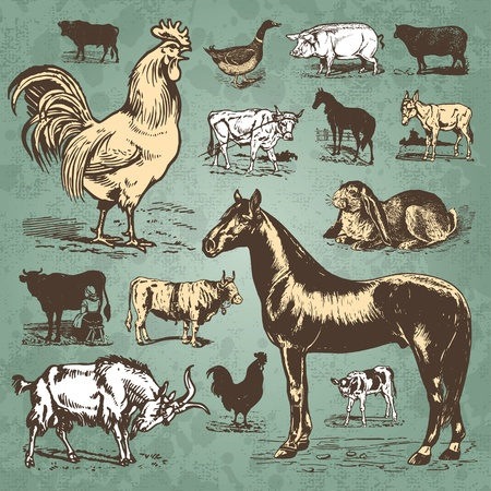 vintage farm animals set (vector) Stock Vector - 9320300