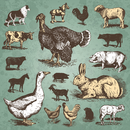 vintage farm animals set  vector  Illustration