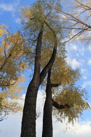 tall: Tall tree