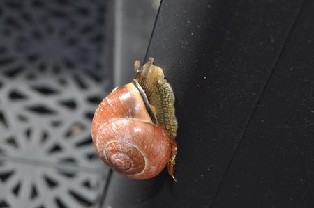 Snail movement on hard surface Reklamní fotografie