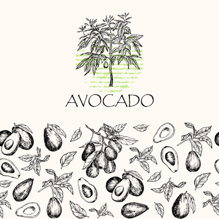 Vector illustration. Isolated avocado fruit tree, avocado leaves and branches. Element of seamless pattern. Illustration