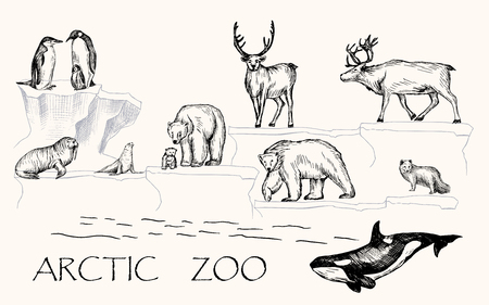 Vector illustration. Pen drawn arctic animals set: penguins, polar bears, walrus, seal, polar fox, reindeers, orca whale. Stock Photo